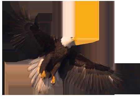 eagle_PNG1236